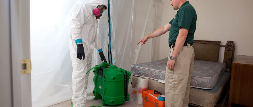Brainerd, MN mold removal process